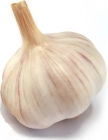 garlic head