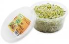 Kiełki brokuła świeże BIO