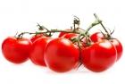 Pomidory na gałązce ekologiczne