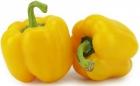 Papryka żółta ekologiczna Bio