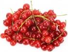 Porzeczki czerwone ekologiczne Bio