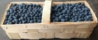 American blueberries straight from the field, freshly picked in Kashubia