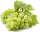 Uvas pasas, brillantes sin semillas