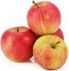 Jabłka na sok ekologiczne Bio