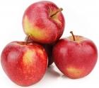Jabłka Gala ekologiczne Bio