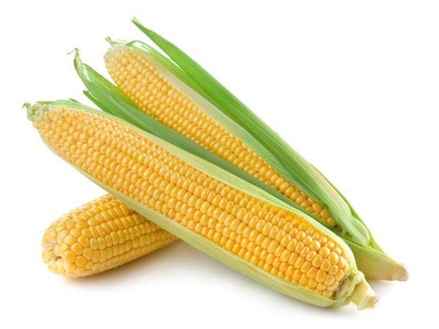 Kukurydza KOLBA